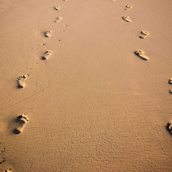 Your Digital Footprint Matters category image